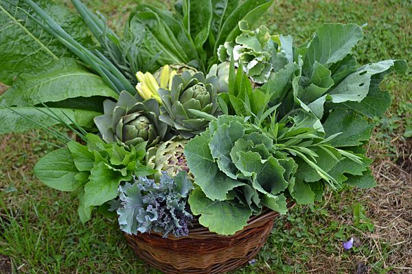 Summer Harvest of Perennial Vegetables