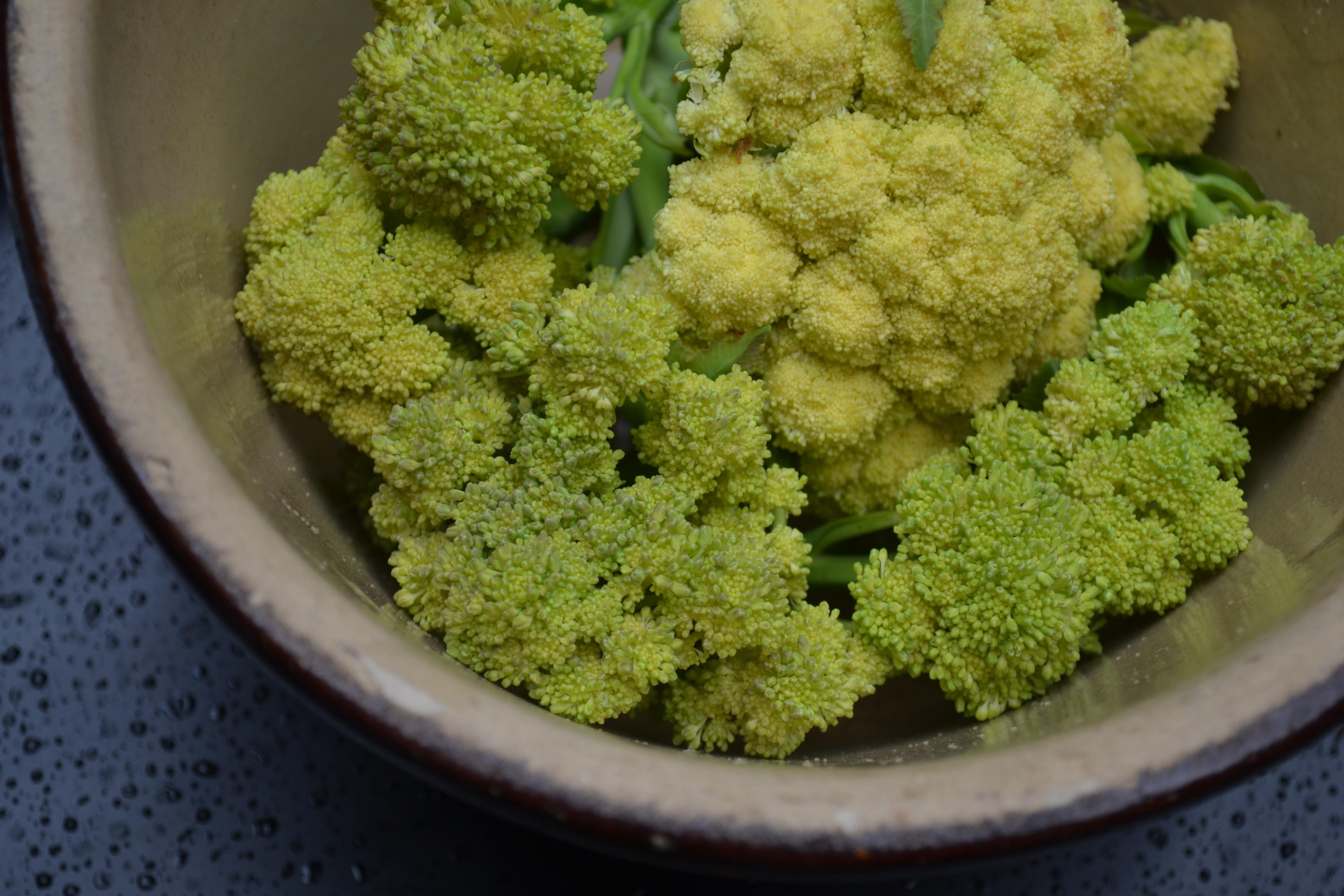 Nine Star perennial broccoli harvest