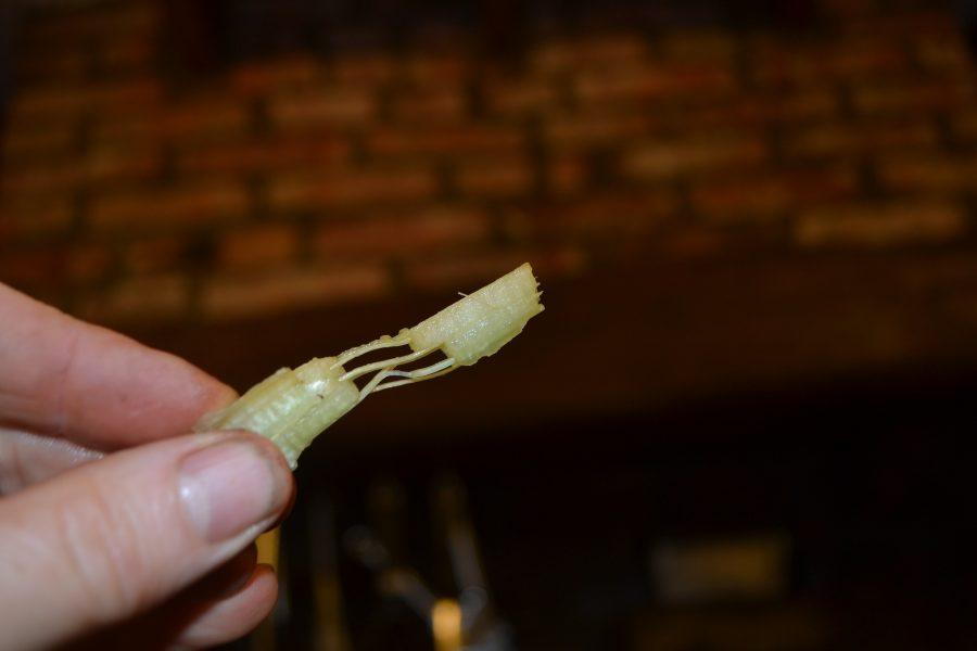 Fibres in a cardoon stalk