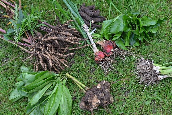 Ingredients for perennial vegetable stew