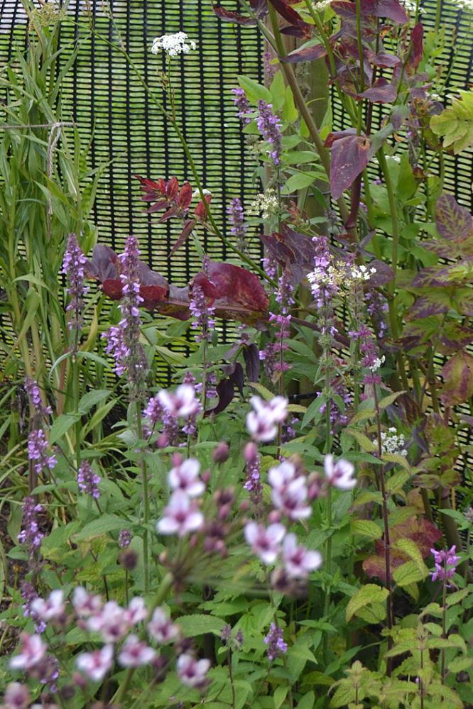 Marsh woundwort and Chinese artichoke plants